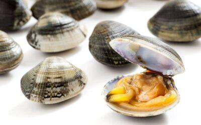 Vongole e Colesterolo: ecco come assumerle correttamente